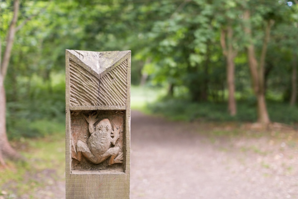 The seventeenth and final post on the Pretty Corner Woods trail. A carving of a frog.