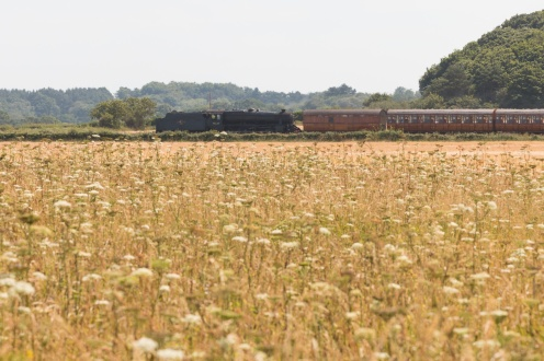 A steam train on the North Norfolk Railway passing behind a wildflower meadow on the clifftops. (Photos from National Trust Sheringham Park.)
