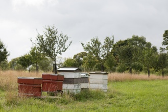 Beehives in the Lyveden apple orchard.