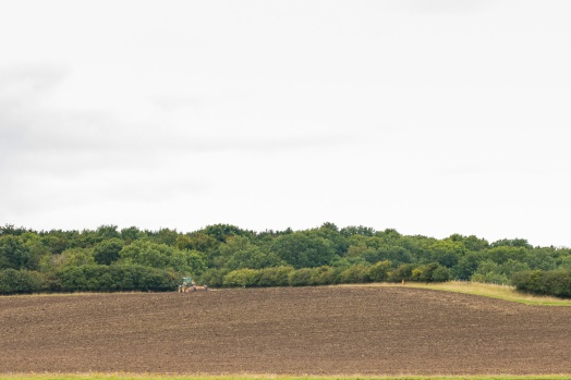 Farmer cultivating the valuable soil ready for seeding next year's crop. Hard to tell from this distance but I think the tractor is pulling a press. Pictures from a walk round most of the Lyveden Way.