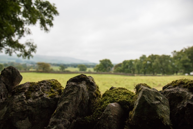 Moss growing on a drystone wall, and the landscape beyond. Photos from a morning walk round Wildlife Trusts Grass Wood in Yorkshire.
