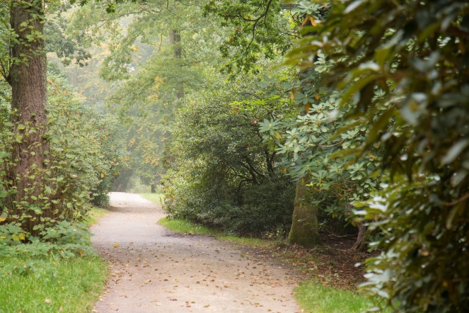 Walking through a misty Woodland Garden. Photos from RHS Harlow Carr in North Yorkshire.