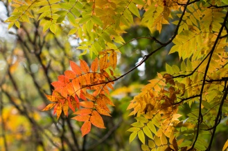A mix of autumnal reds and yellows. Photos from RHS Harlow Carr in North Yorkshire.