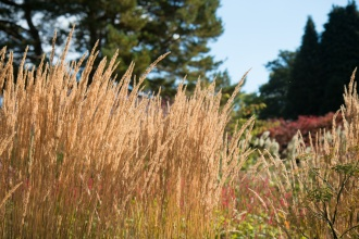 Grass flowers glowing in the afternoon sunlight. Photos from RHS Harlow Carr in North Yorkshire.