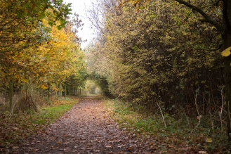 Tunnel of autumn colour along one of the paths. Photos from Wildlife Trusts Summer Leys nature reserve in Northamptonshire, UK.