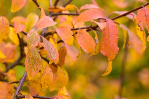 Autumnal colours in the leaves of this tree. Photos from Wildlife Trusts Titchmarsh Nature Reserve in Northamptonshire, UK.
