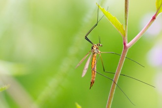 Another wet and cloudy one for day 23 of #30DaysWild. Not much about in the garden but spotted this cranefly.