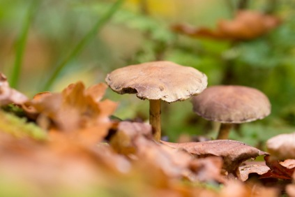 A pair of toadstools growing on an old treestump. Photos from a trip to Wakerley Great Wood.