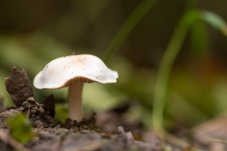One of a small cluster of little white mushrooms, growing next to the path. Photos from a trip to Wakerley Great Wood.