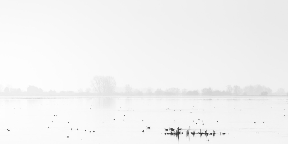 Birds and fence posts breaking up the otherwise still flood waters at the Ouse Washes.