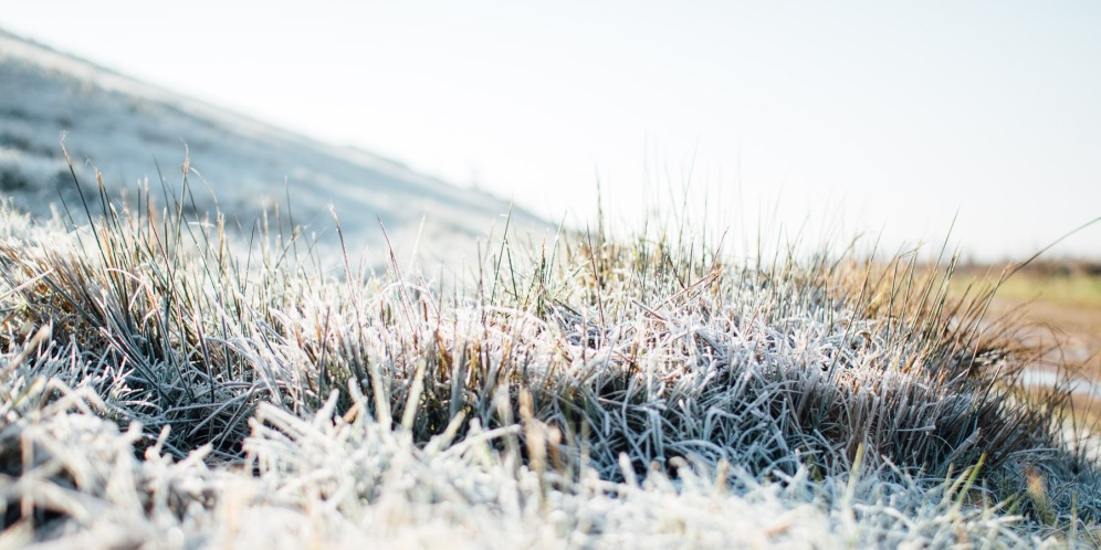 Heavy morning frost on the grass at the Ouse Washes.