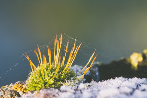 Frost and moss growing on a bird hide hand rail at the Ouse Washes.