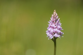 Lots of common spotted orchids in flowers at the moment, scattered everywhere through the woods. Photos from a trip to Wildlife Trusts Brampton Wood on day 7 of 30 Days Wild.
