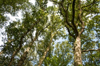 Blue sky and sunshine through the leaves of the tree canopy. Photo taken during a visit to Wildlife Trusts Short Wood and Southwick Wood, earlier this month.