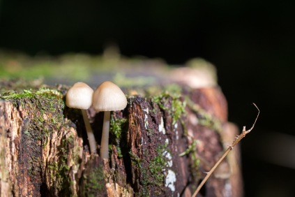 Fungi on a rotting tree stump. Photo taken during a visit to Wildlife Trusts Short Wood and Southwick Wood, earlier this month.