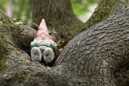 A gnome having a nap in the middle of a tree. Photo taken during a visit to Wakerley Great Wood in Northamptonshire.
