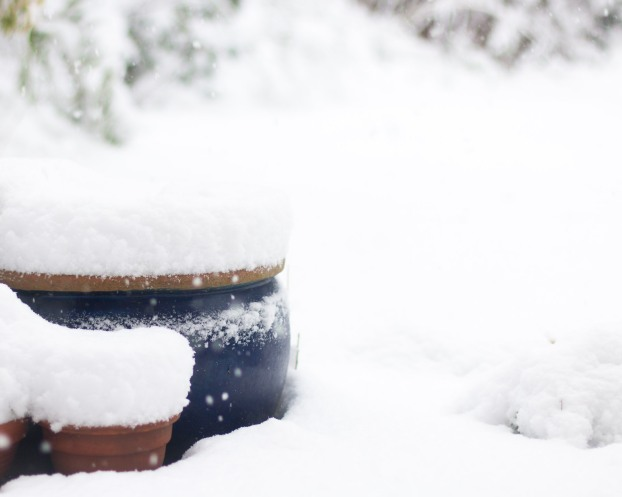 Snow gathering on and around plant pots in the garden.